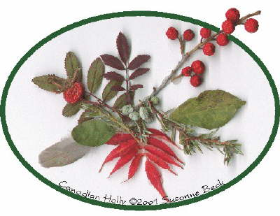 The Canadian Holly original features a brilliant sprig of Canadian Holly berries, rising from a center of wild Ground Juniper berries and needles. The bright red of a Sumac leaf from fall settles beside the tiny feather of a Mourning Dove. A wild Rose Hip and leaves, along with several Hawthorne leaves, complete the picture.